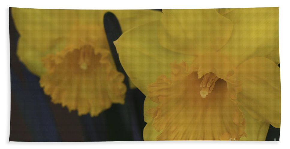 Daffodils Beach Towel featuring the photograph Duo In Daffodils by Deborah Benoit