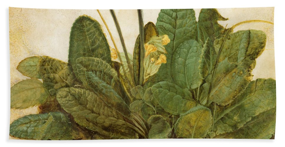 15th Century Beach Sheet featuring the photograph Durer Tuft Of Cowslips by Granger