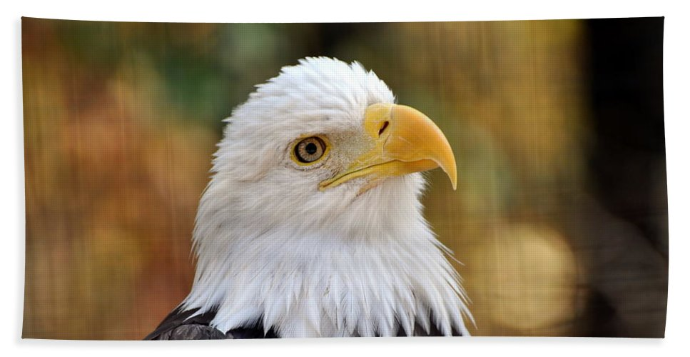 Eagle Beach Towel featuring the photograph Eagle 9 by Marty Koch