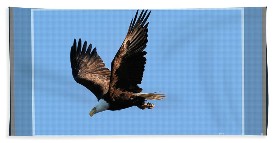 Bald Eagle Beach Towel featuring the photograph Eagle Encounter, Framed by Sandra Huston