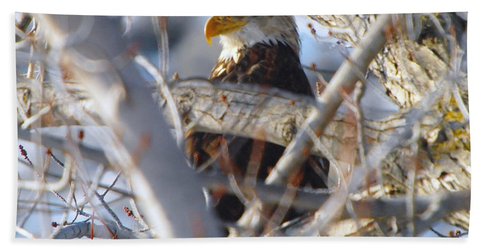 Eagles Beach Towel featuring the photograph Eagle In A Tree by Jeff Swan