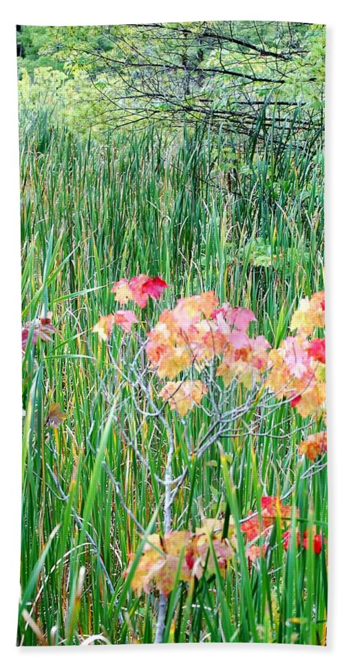 Digital Photograph Beach Towel featuring the photograph Early Fall Color by David Lane
