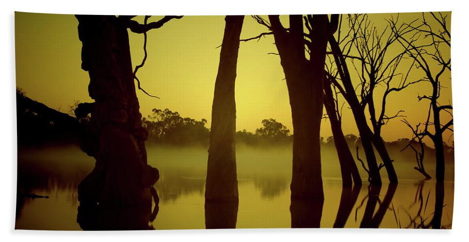 Dead Trees Beach Towel featuring the photograph Early Morning Mist At The River by Douglas Barnard
