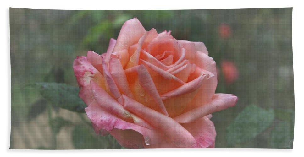 Rose Beach Towel featuring the photograph Early Morning Tear by Douglas Barnard
