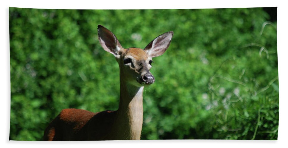 Deer Beach Towel featuring the photograph Ears by Lori Tambakis