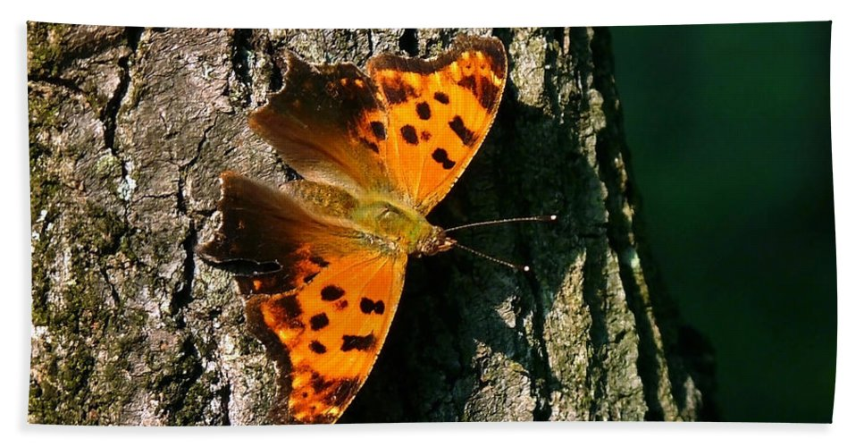 Eastern Comma Butterfly Beach Towel featuring the photograph Eastern Comma Butterfly by Christina Rollo