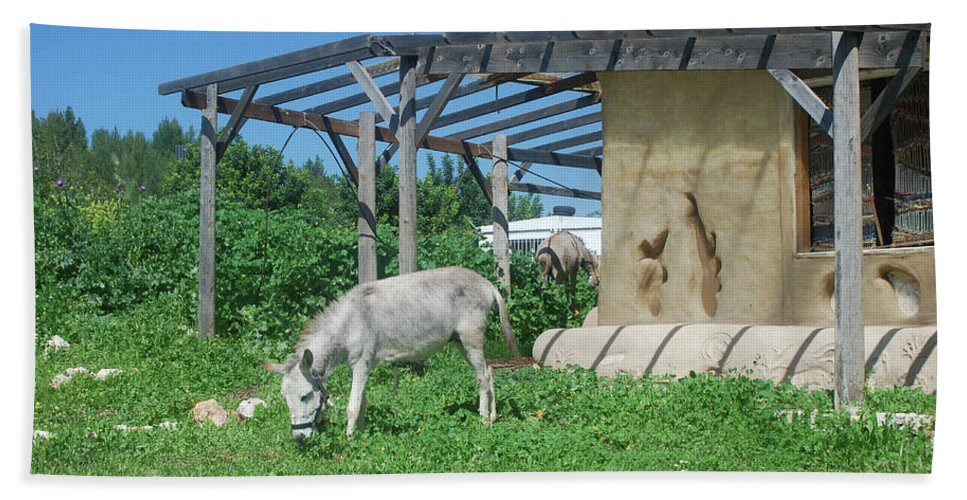 Tranquil Beach Towel featuring the photograph Ecological Farm by Yotam Jacobson