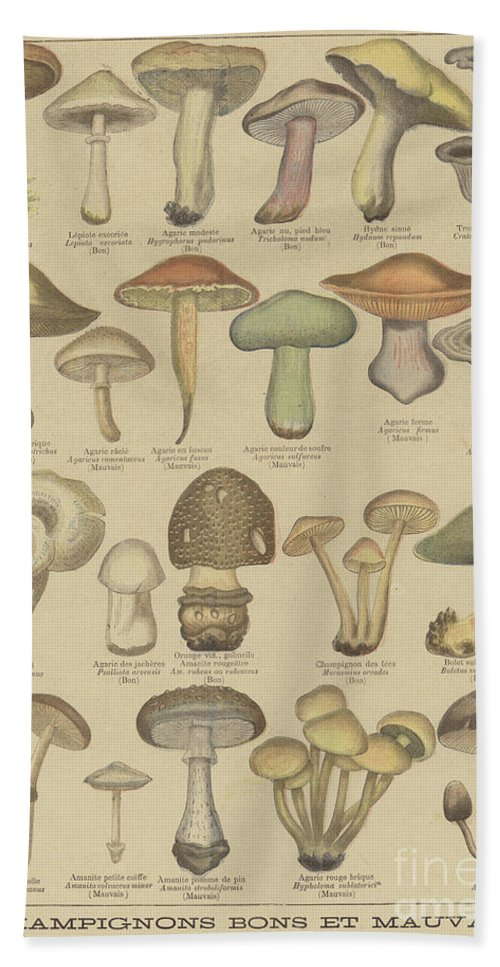 Food Beach Towel featuring the drawing Edible And Poisonous Mushrooms by French School