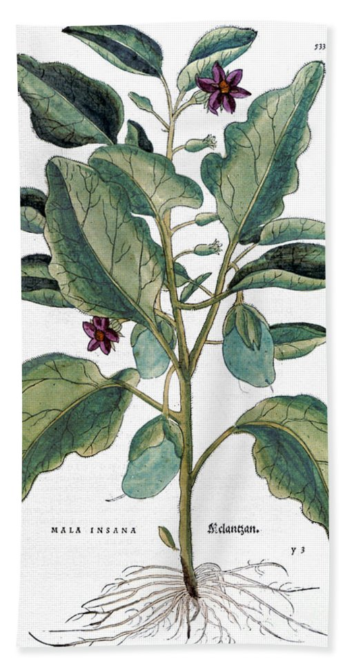 1730s Beach Towel featuring the photograph Eggplant, 1735 by Granger