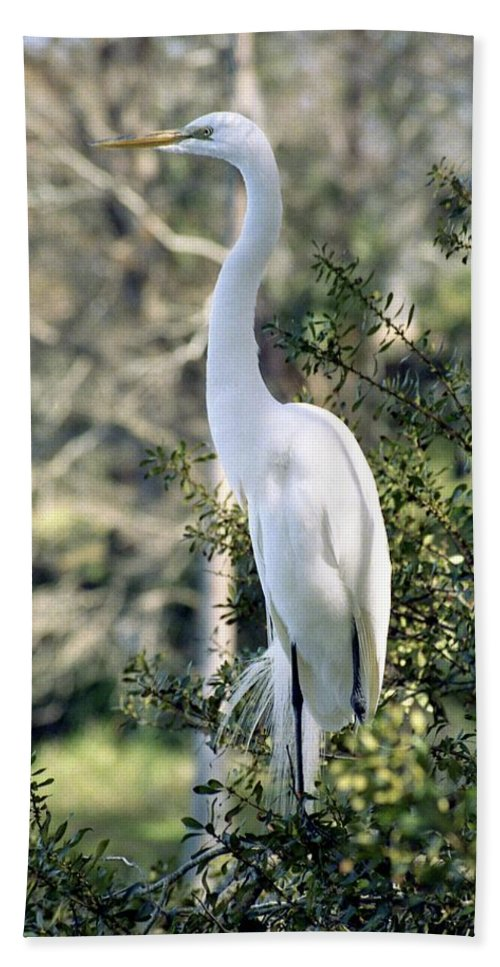 Egret Beach Towel featuring the photograph Egret 2 by Michael Peychich