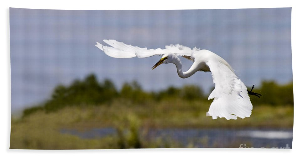 Egret Beach Towel featuring the photograph Egret Ballet by Mike Dawson