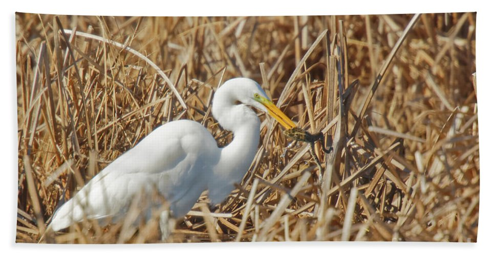 Egret Beach Towel featuring the photograph Egret Breakfast by Natural Focal Point Photography