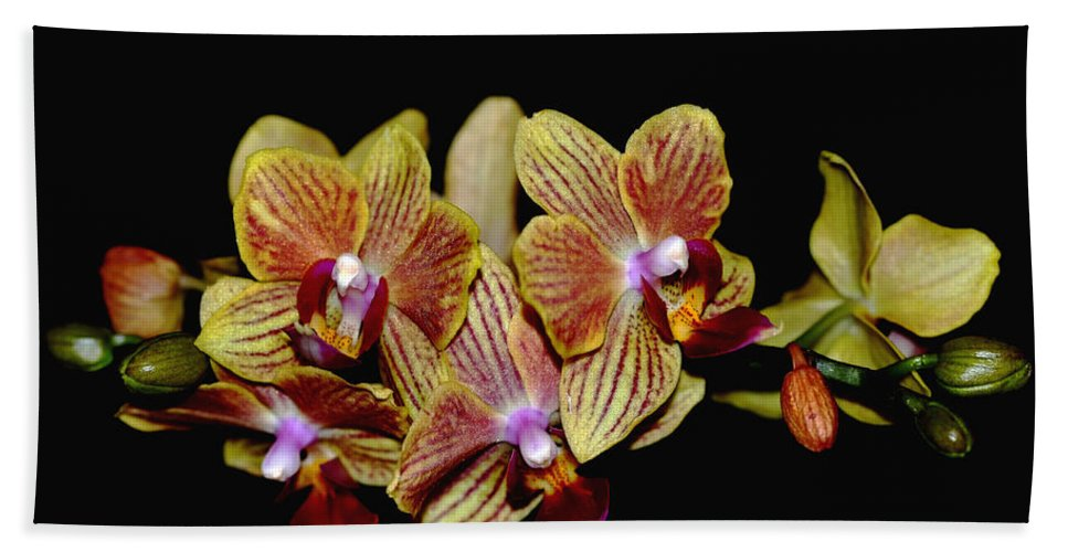 Orchid Beach Towel featuring the photograph Elegant Orchid On Black by Debbie Oppermann