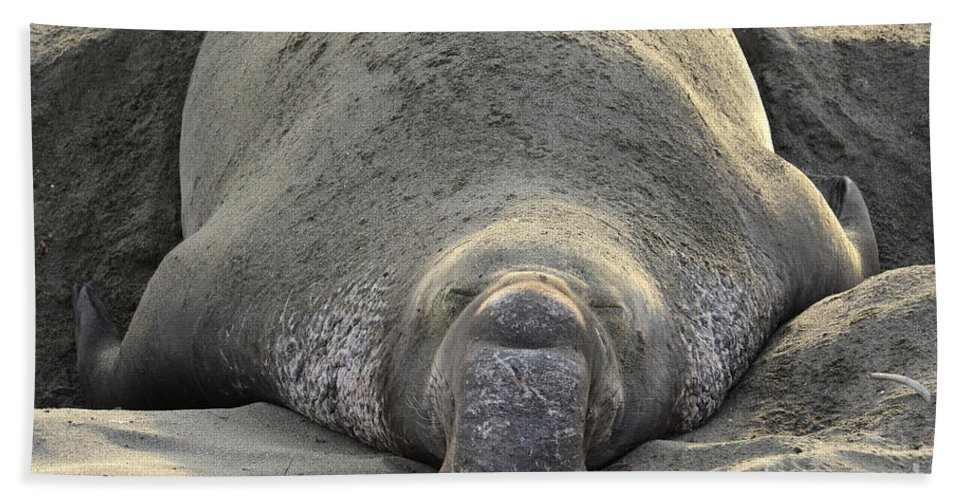 California Beach Towel featuring the photograph Elephant Seal 3 by Bob Christopher