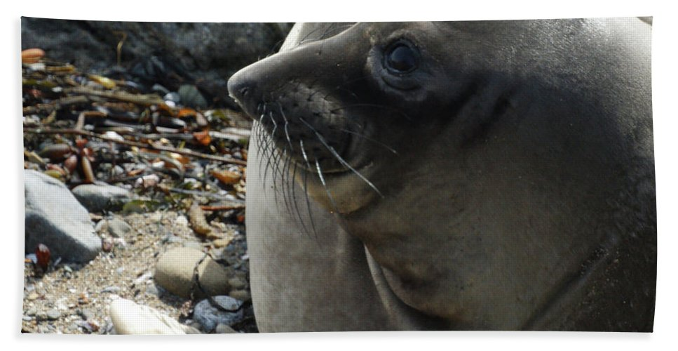 Elephant Seals Beach Towel featuring the photograph Elephant Seal by Ernie Echols