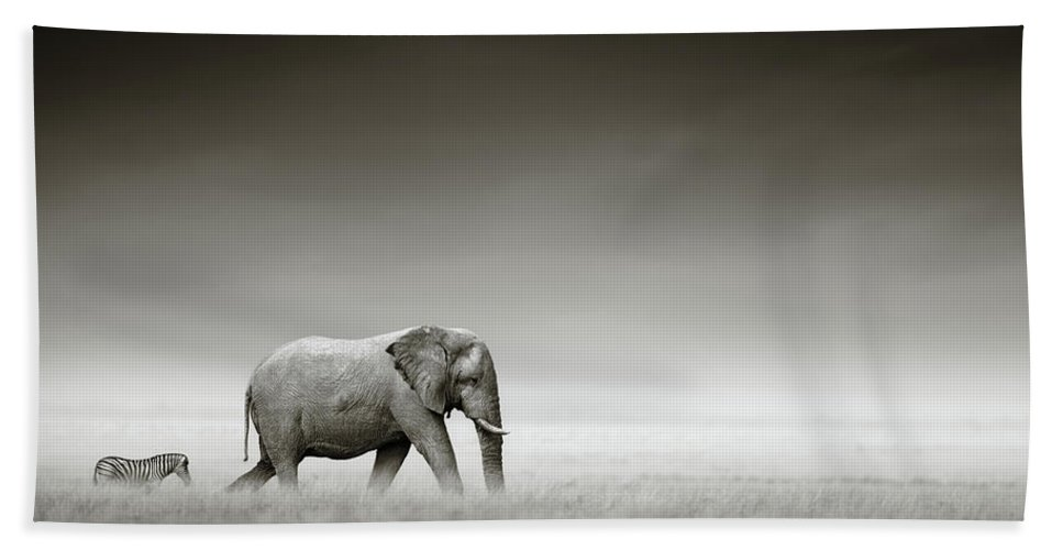 Elephant; Zebra; Behind; Follow; Huge; Big; Grass; Grassland; Field; Open; Plains; Grassfield; Dark; Sky; Together; Togetherness; Art; Artistic; Black; White; B&w; Monochrome; Image; African; Animal; Wildlife; Wild; Mammal; Animal; Two; Moody; Outdoor; Nature; Africa; Nobody; Photograph; Etosha; National; Park; Loxodonta; Africana; Walk; Namibia Beach Towel featuring the photograph Elephant With Zebra by Johan Swanepoel