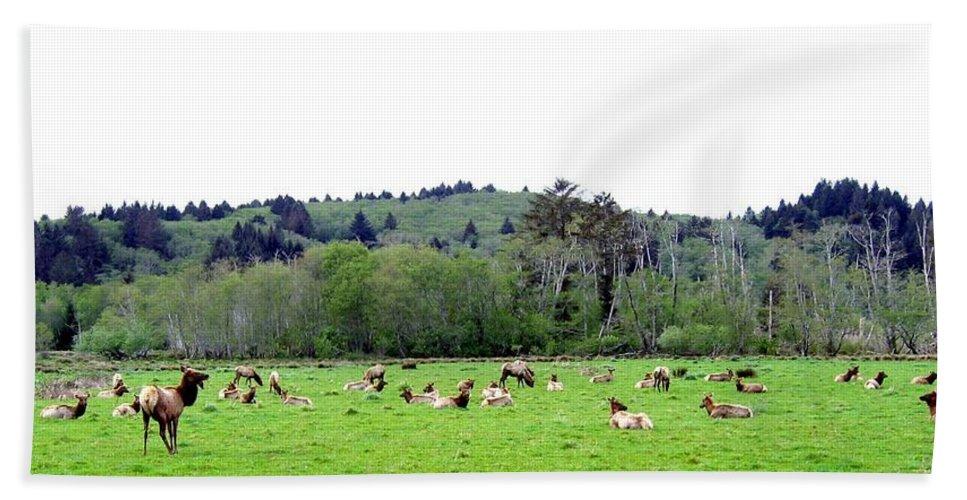 Elk Beach Towel featuring the photograph Elk Herd by Will Borden