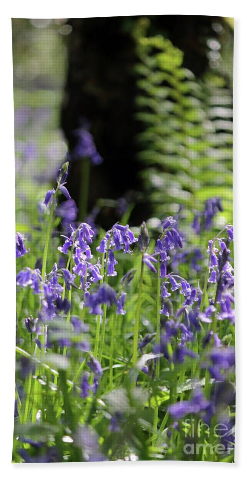 English Bluebells In Bloom Epsom Surrey Uk Wood English Bluebells Wood Effingham Surrey Uk Countryside Landscape Blue Flowers Traditional Scene Woodland Bluebell Forest Picturesque Beech Trees Tree Trunk Beach Towel featuring the photograph English Bluebell Wood by Julia Gavin