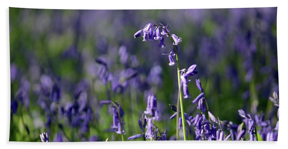 English Bluebells In Bloom Epsom Surrey Uk English Bluebells Wood Effingham Surrey Uk Countryside Landscape Blue Flowers Traditional Scene Woodland Bluebell Forest Picturesque Close Up Beach Towel featuring the photograph English Bluebells In Bloom by Julia Gavin