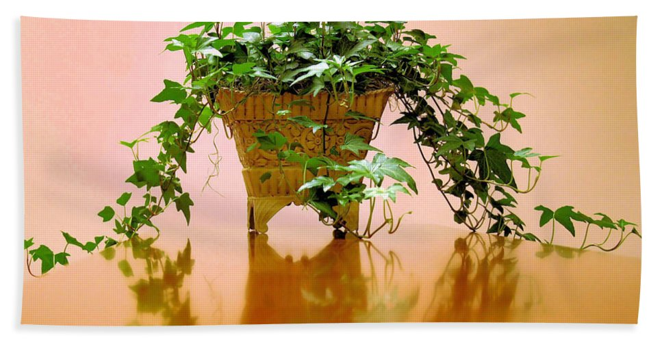 Ivy Beach Towel featuring the photograph English Ivy by Kristin Elmquist