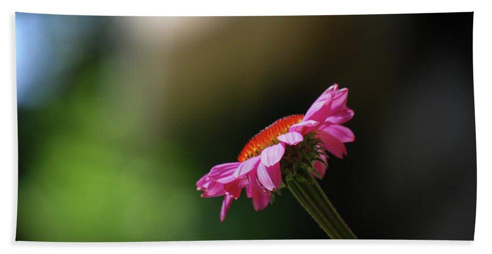 Daisy Beach Towel featuring the photograph Enjoying The Sunlight by Lori Tambakis