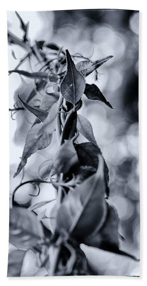 Black And White Beach Towel featuring the photograph Entangled by Scott Wyatt
