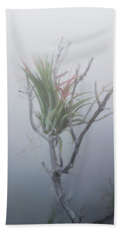 Epiphyte Beach Towel featuring the photograph Epiphyte In The Fog by Barroa Artworks