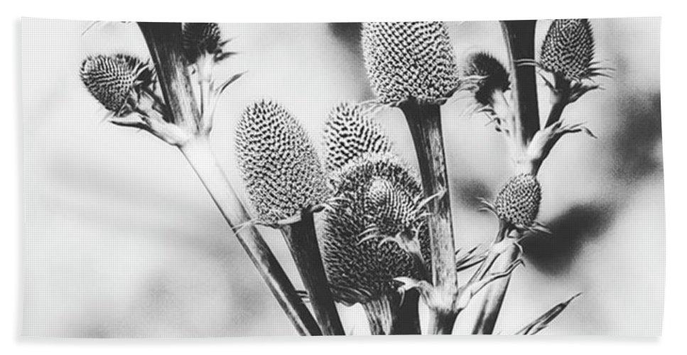 Beautiful Beach Towel featuring the photograph Eryngium #flower #flowers by John Edwards