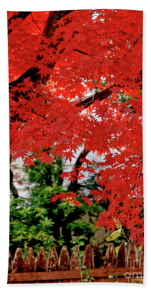 Tree Beach Towel featuring the photograph Essence Of Japanese Maple Tree by Carol F Austin