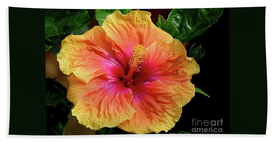 Exotic Hibiscus Flower By Kaye Menner Beach Towel For Sale By Kaye