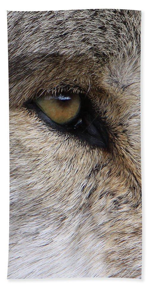 Wolf Beach Towel featuring the photograph Eye Catcher by Shari Jardina