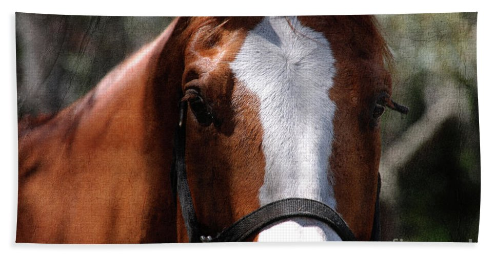 Horse Beach Towel featuring the photograph Eye Contact by Susanne Van Hulst