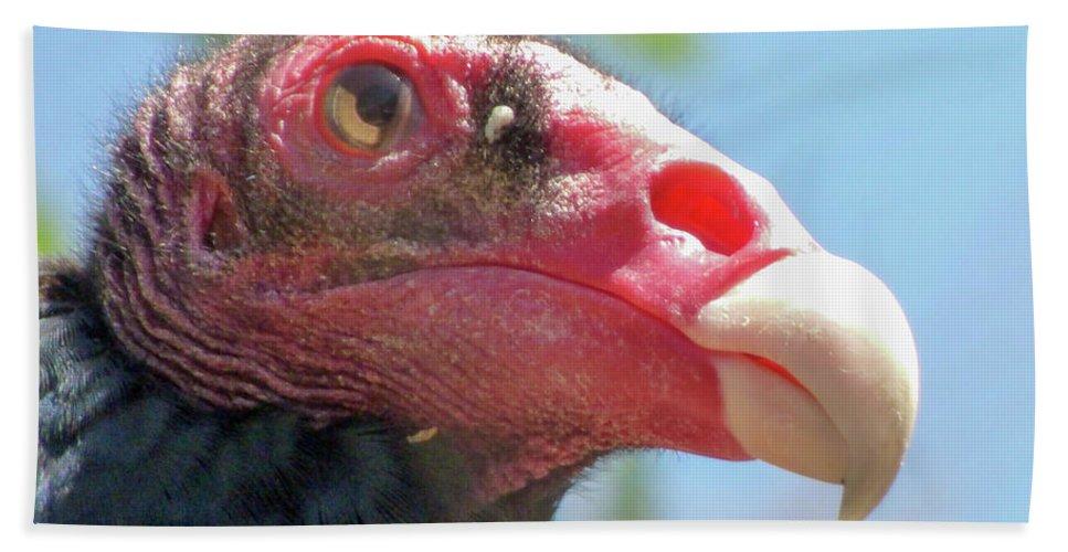 #orcinusfotograffy #arizona #phoenix #zoo #turkey #vulture #profile #beak #eye #nature #colors #animal Beach Towel featuring the photograph Eyeing The World by Kimo Fernandez