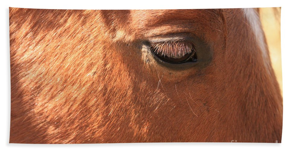 Horse Beach Towel featuring the photograph Eyelashes - Horse Close Up by James BO Insogna