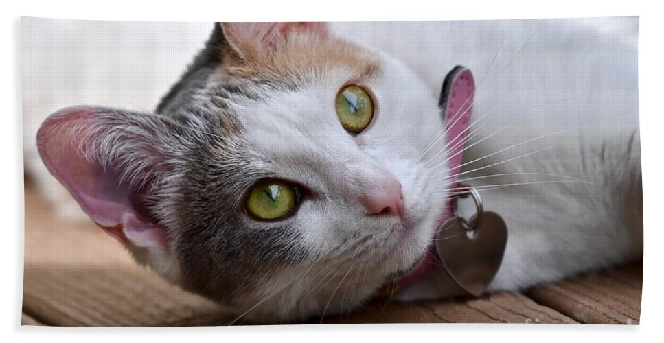 Cat Beach Towel featuring the photograph Eyes On The Prize by Jeramey Lende
