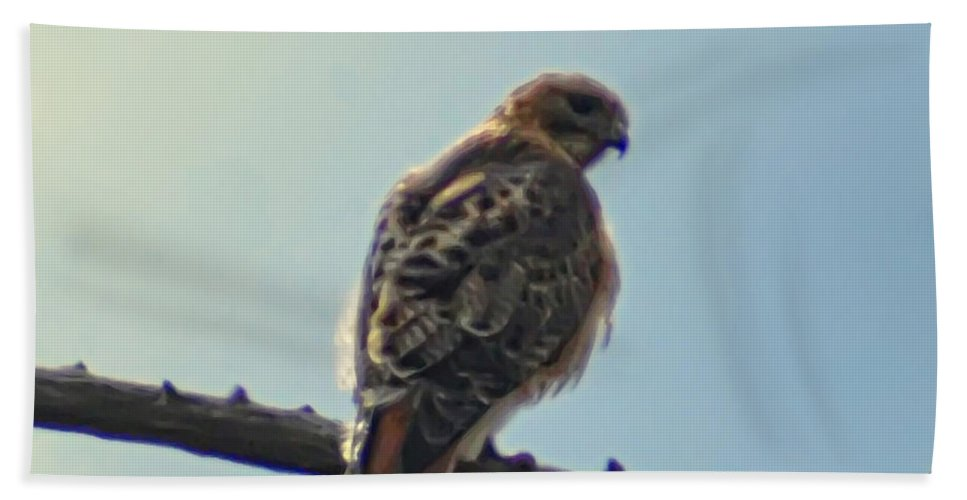 Peregrine Beach Towel featuring the photograph Falcon by Bill Cannon