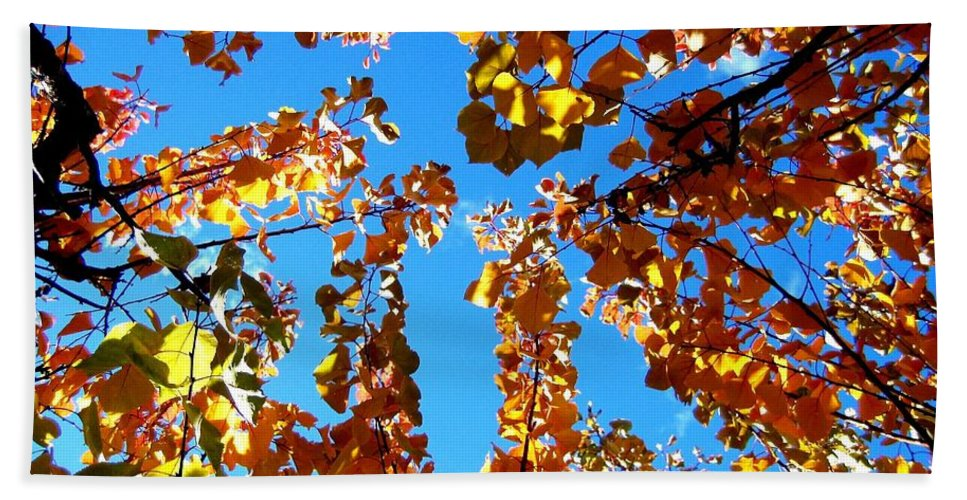 Apricot Leaves Beach Towel featuring the photograph Fall Apricot Leaves by Will Borden
