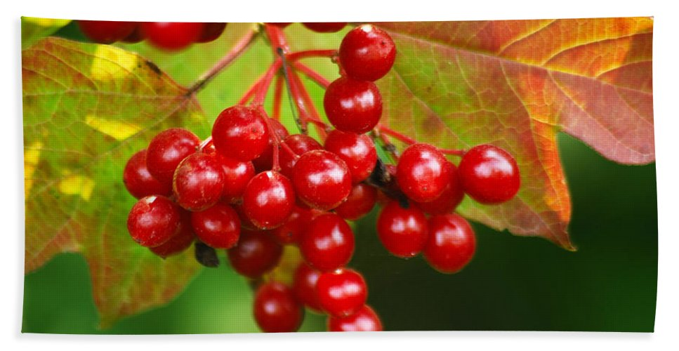 Autumn Beach Towel featuring the photograph Fall Berries 2 by Michael Peychich