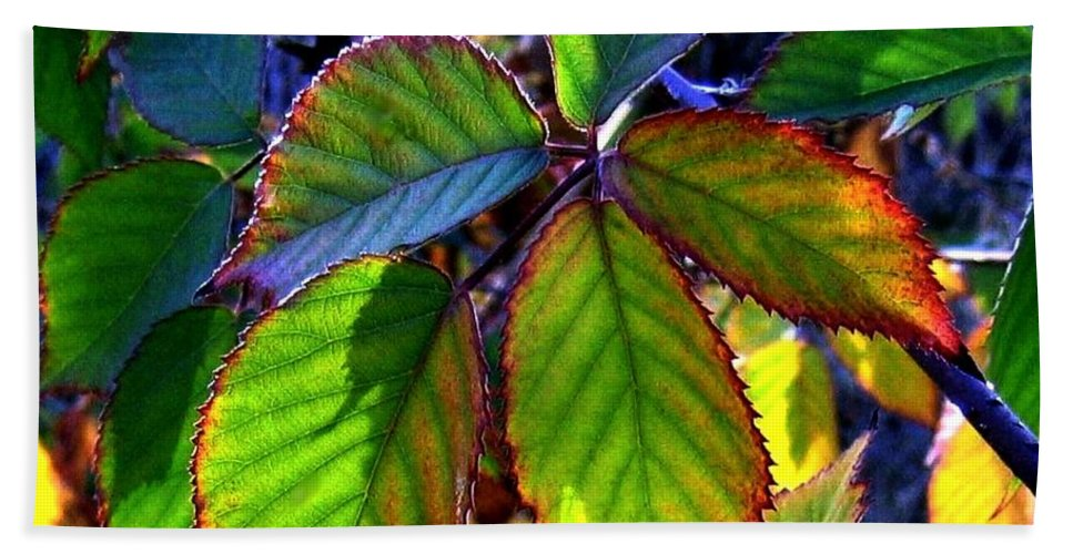Fall Beach Towel featuring the photograph Fall Blackberry by Will Borden