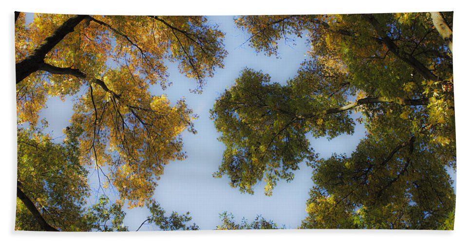 Fall Beach Towel featuring the photograph Fall Canopy In Virginia by Teresa Mucha