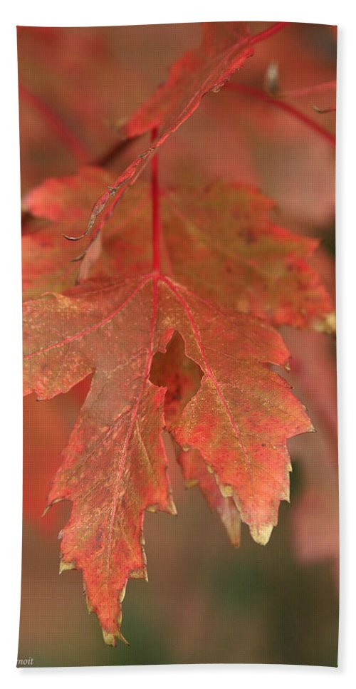 Beach Towel featuring the photograph Fall Color In Softness by Deborah Benoit