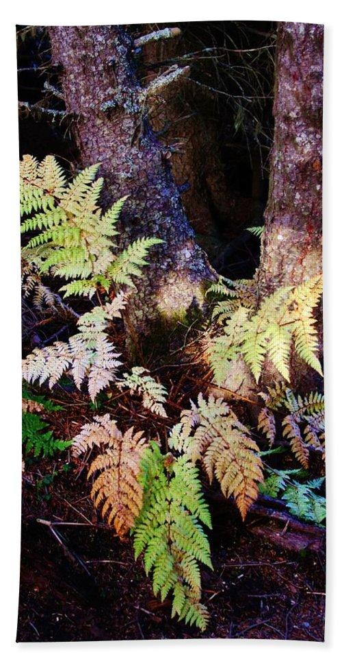Alaskan Ferns In Autumn Beach Towel featuring the photograph Fall Ferns by Lori Mahaffey