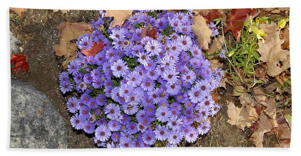Fall Beach Towel featuring the photograph Fall Flowers by David Lee Thompson