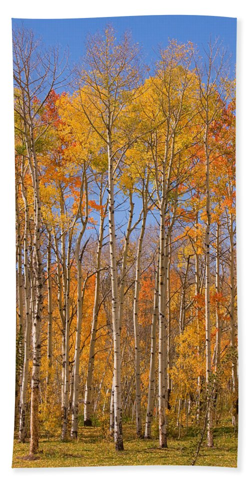 Trees Beach Towel featuring the photograph Fall Foliage Color Vertical Image by James BO Insogna