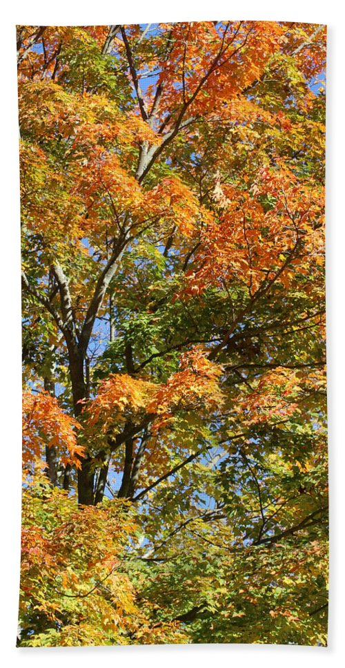 Autumn Beach Towel featuring the photograph Fall Gradient by William Selander