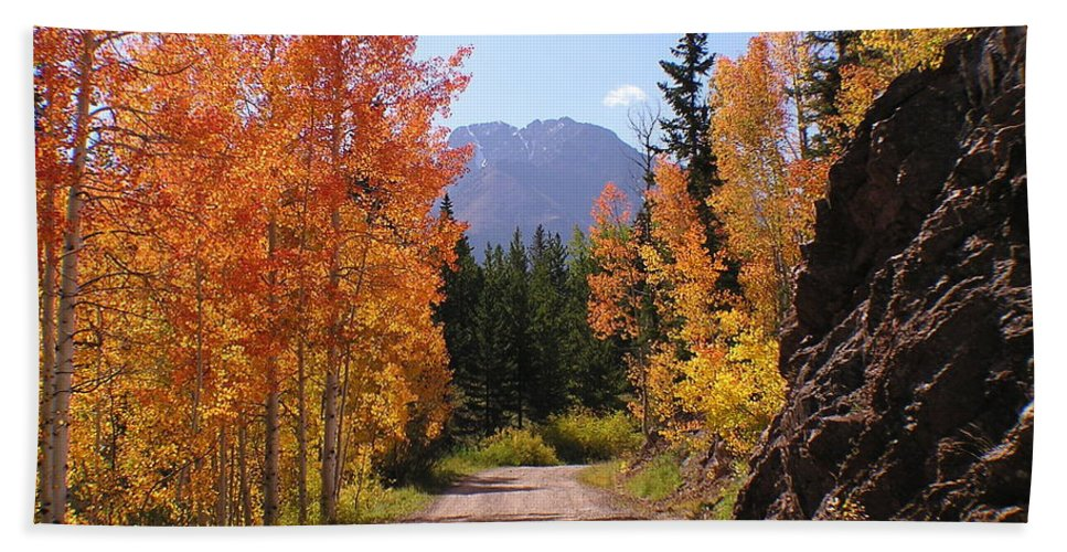 Trees Beach Towel featuring the photograph Fall In Colorado by Carol Milisen