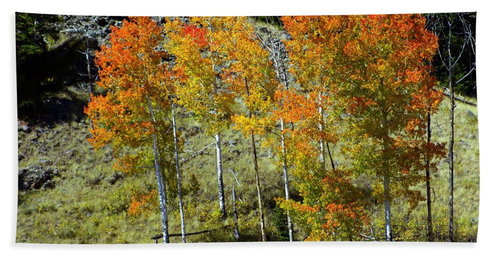 Beach Towel featuring the photograph Fall In Colorado by Marty Koch