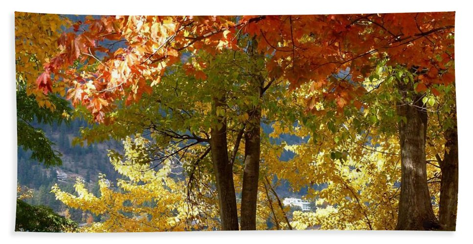 Kaloya Park Beach Towel featuring the photograph Fall In Kaloya Park 4 by Will Borden