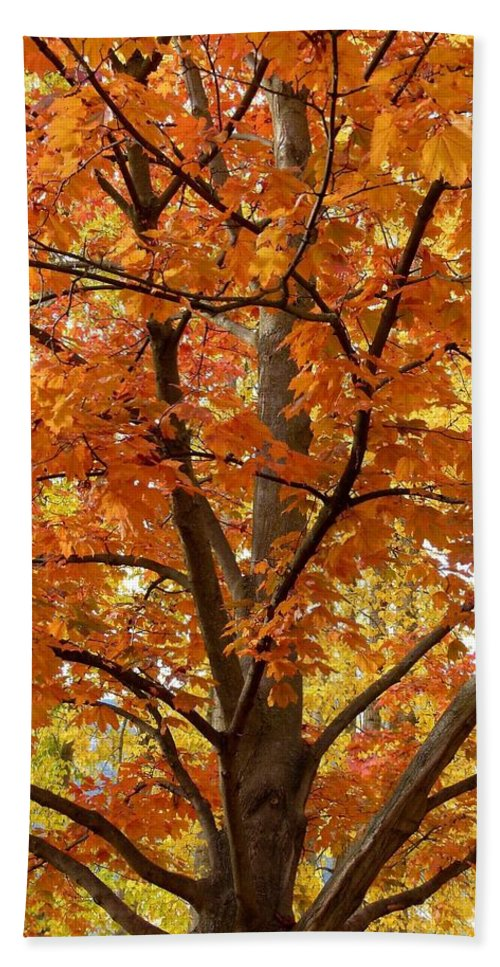 Kaloya Park Beach Towel featuring the photograph Fall In Kayloya Park 2 by Will Borden