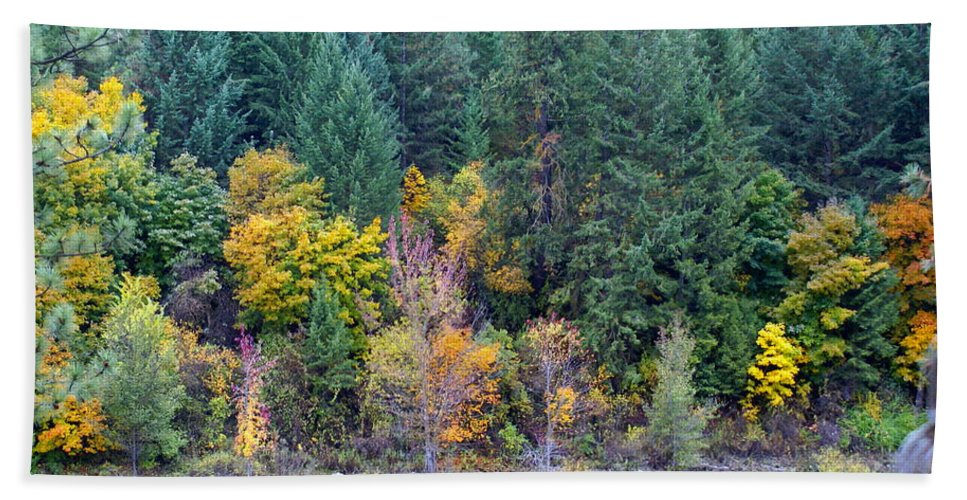 Nature Beach Towel featuring the photograph Fall In Spokane by Ben Upham III